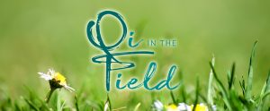 Qi in the Field